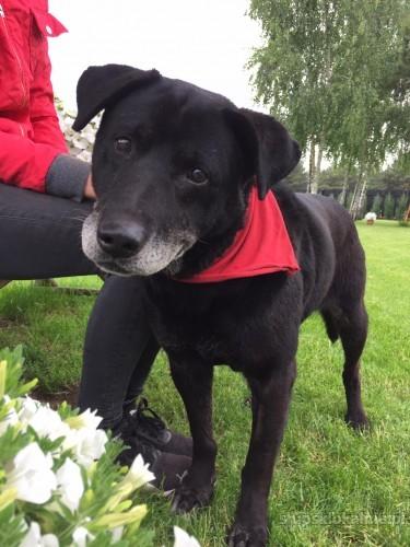 Belmondo, wesoły, wspaniały pies szuka domu!
