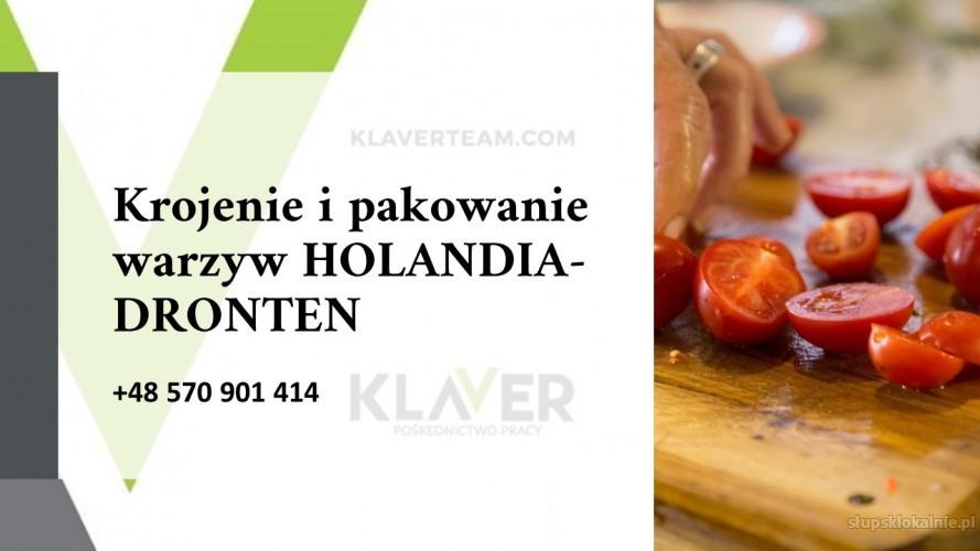 SAŁATKI obiadowe produkcja, krojenie i pakownie warzyw praca w  - Holandia